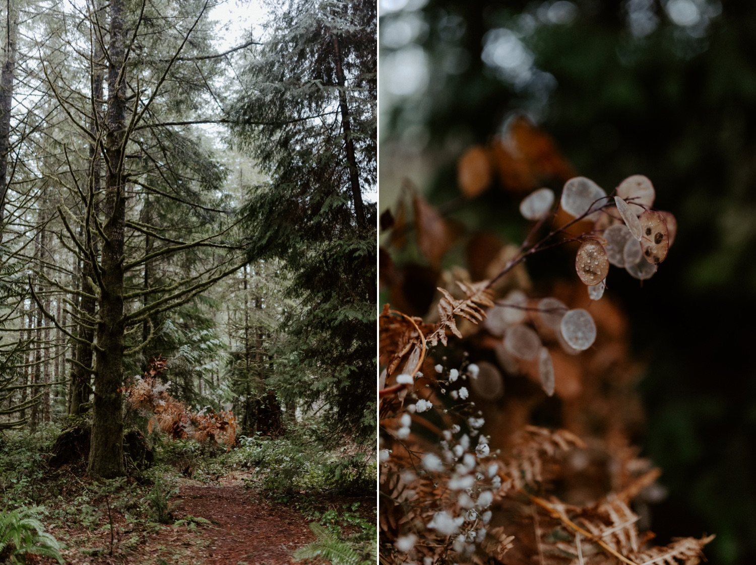 The Woodlands House Sandy Oregon Elopement Portland Elopement Photographer PNW Adventurous Elopement Anais Possamai Photography 012